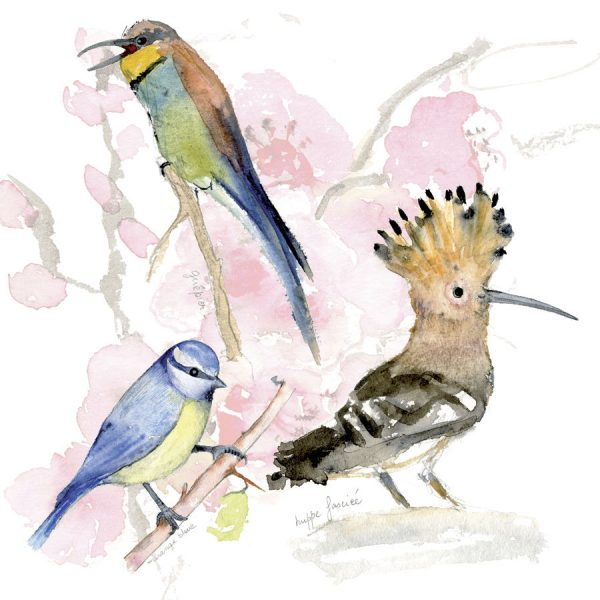Oiseaux sur fond de cerisier carte carrée